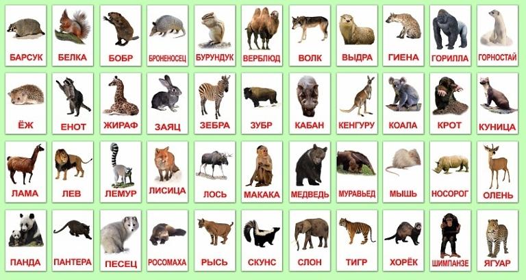 Красивые фотографии животных (9 фото) - Fishki net
